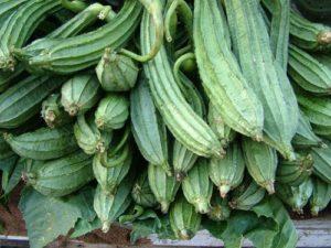 Ridge Gourd Nutrition